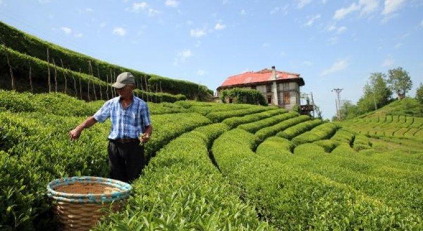 Çay ihracatından 13 milyon dolar kazandık