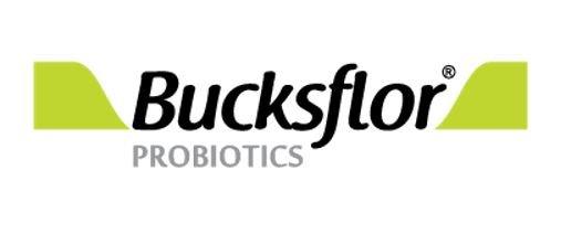 Bucksflor